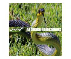 A1 Snake Relocation