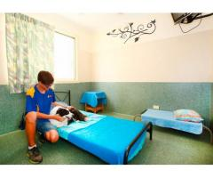 Cat and Dog Boarding - Yeronga Vet Surgery