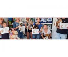 Puppy School - Yeronga Vet Surgery
