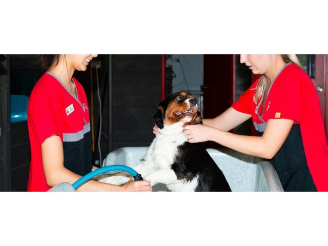 Hydrobath - Yeronga Vet Surgery