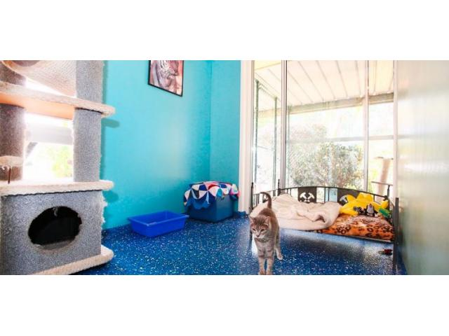 Pet Accommodation - Yeronga Vet Surgery